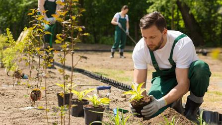 Ein Gärtner beim Einpflanzen.